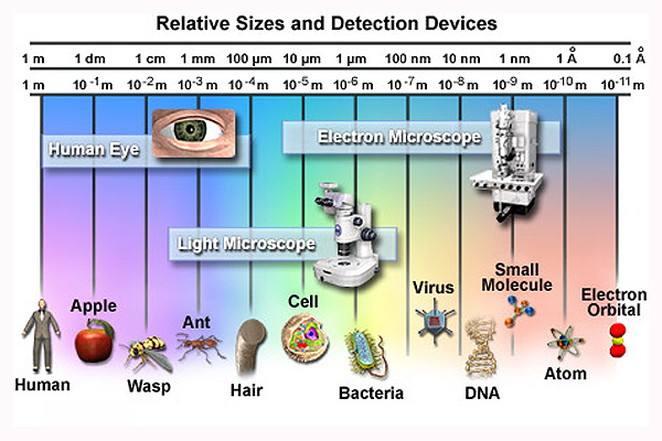 What microscopes do you use to see microbes? | UNC Biology Pen Pal ...